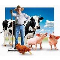 С чего начать крестьянско-фермерское хозяйство (КФХ)