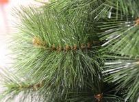 Иголки искусственной елки из Лески