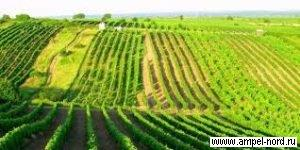 Южный склон. Место для виноградника. Блог Олены Непомнящей.