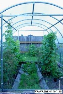 Туннель. Место для виноградника. Блог Олены Непомнящей.