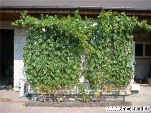 Южный пристенок,Место для виноградника. Блог Олены Непомнящей.