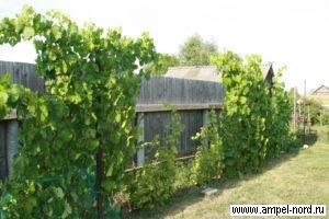 Спецзабор. Место для виноградника. Блог Олены Непомнящей.