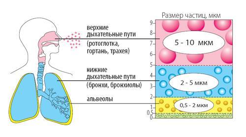 Воздействие небулайзера на систему дыхания и лёгкие