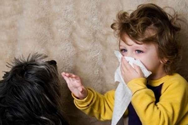 Аллергия у детей на хомяка