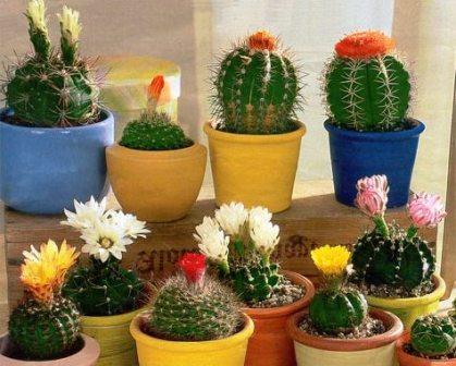 Какие цветы лучше выращивать дома
