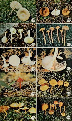 грибы на английском языке для детей3