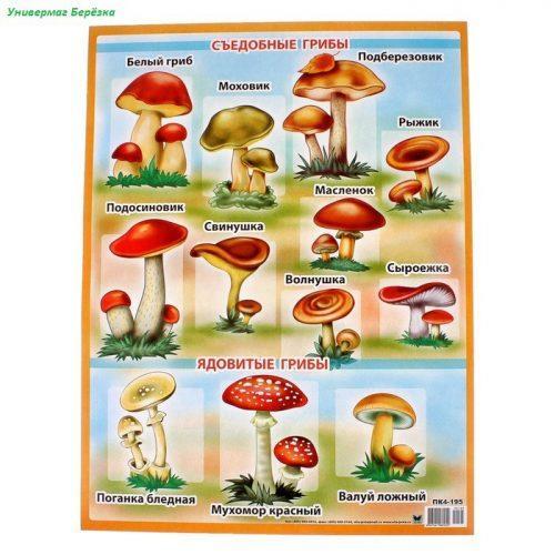 грибы картинки для детей5