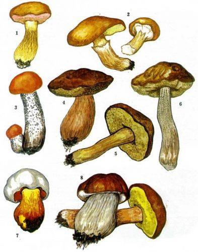 картинки грибов