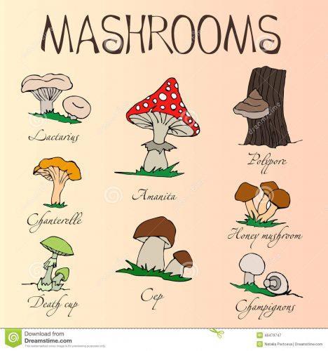 грибы на английском языке для детей2