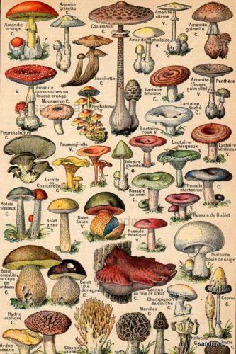 грибы на английском языке для детей