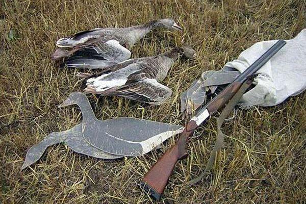 Чучела и профили охотники используют вместе с манком