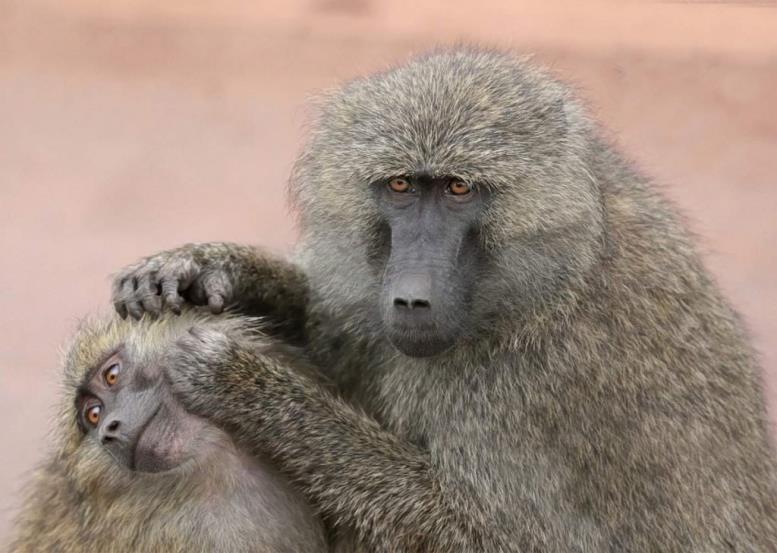 Груминг — это активное поведение животных, направленное на очистку поверхности тела.
