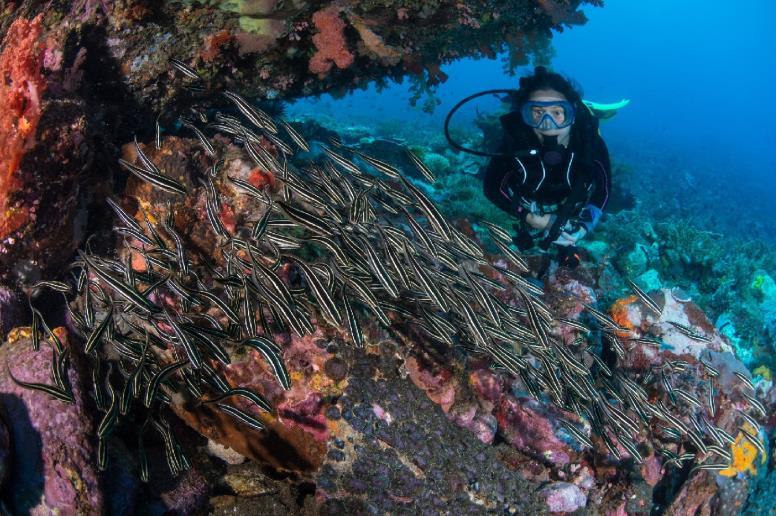 подводное плавание декатлон