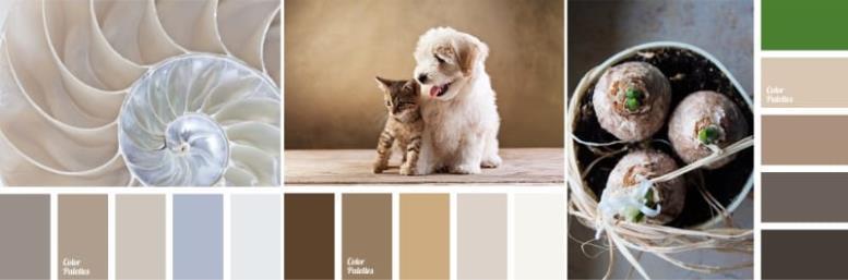 Примеры палеток с сайта Color Palettes