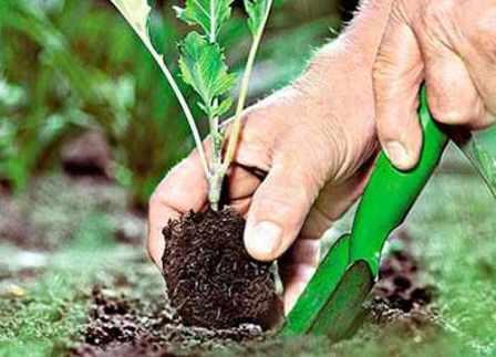 Как выбрать качественную рассаду для дачи: советы опытных дачников