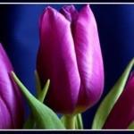 Любимый цвет и Ваш характер. Что означает любимый цвет женщины?