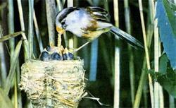 Птицы летят над клухором