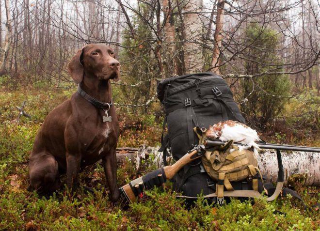 как выбрать собаку для охоты куцхаар