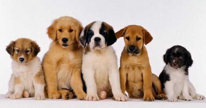 Как выбрать собаку - важные советы и подсказки