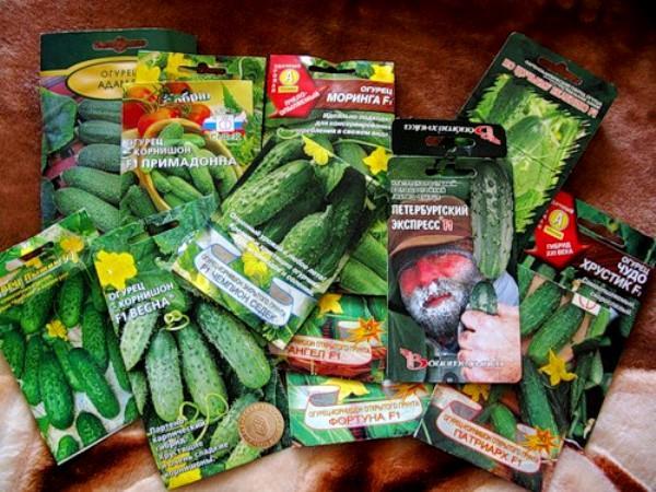 семена для выращивания в теплице
