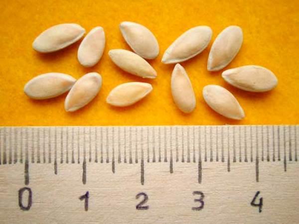 размер огуречных семян