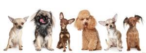 Как назвать свою собаку