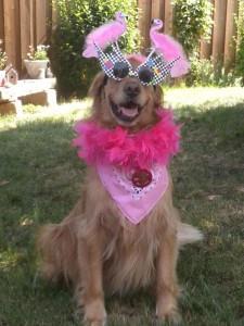 Собачьи имена для собак-девочек