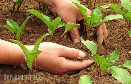 Планирование огорода. Определяемся с посадками, выбираем семена