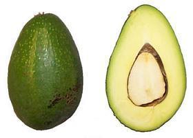 Сорт авокадо Зутано