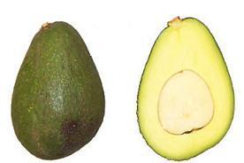 Сорт авокадо Фуэрте