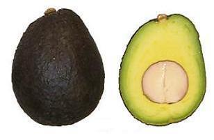 Сорт авокадо Лэмб Хасс