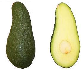 Сорт авокадо Пинкертон
