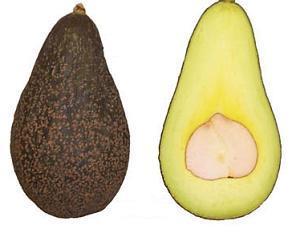 Сорт авокадо Карлсбад