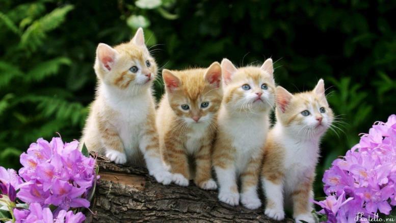 Какого котенка выбрать?