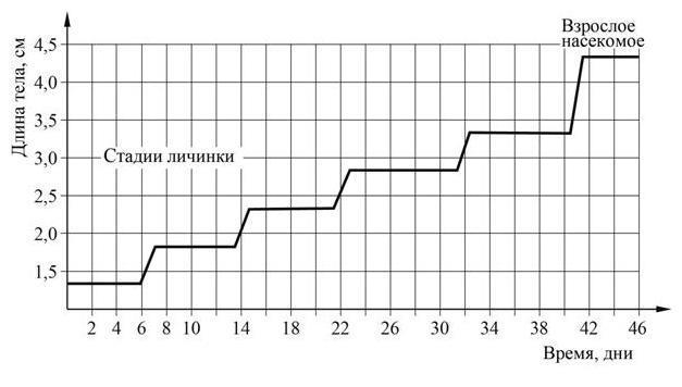 Стадии роста личинки