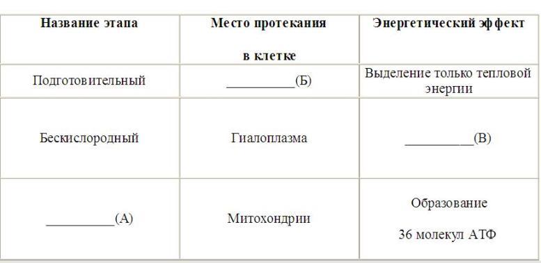 Этапы энергетич обм (табл)