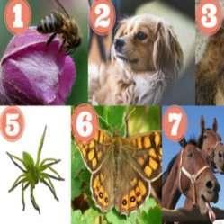 Тест: Выбери животное и получи послание от природы!