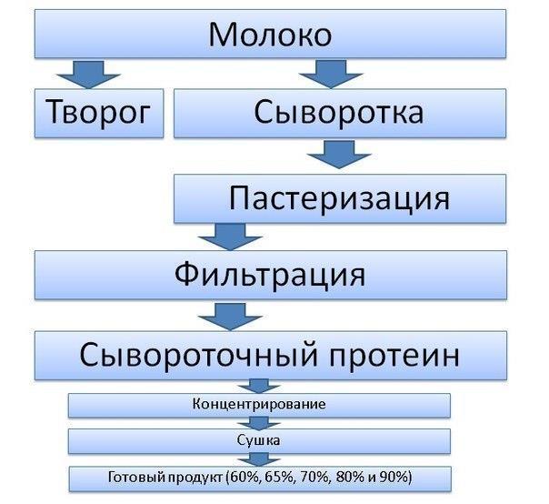 proces-proizvodstva-syvorotochnogo-proteina